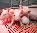 Год начался успешно для животноводства области