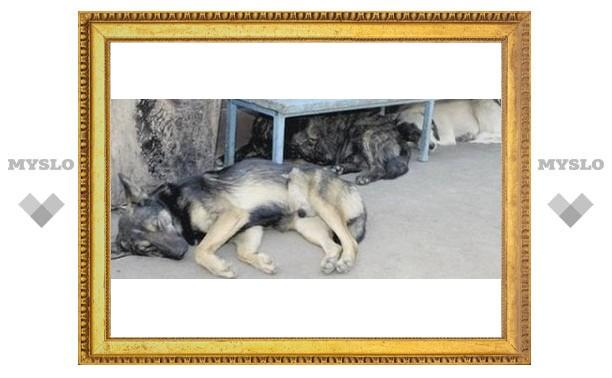 Тульский детсад атакуют бродячие псы