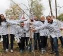 В Ясной Поляне появилась рябиновая аллея