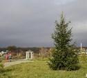 Завершился прием заявок на конкурс по озеленению «Петровского квартала»