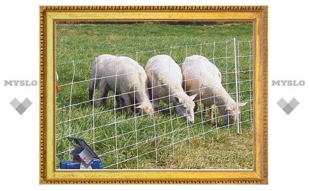 В Чернском районе пастух обокрал овчарню