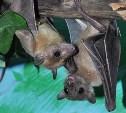 Туляков приглашают на Международную ночь летучих мышей
