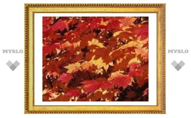 Установлены закономерности появления осенью красных листьев