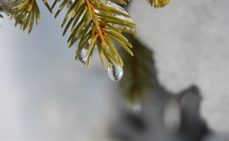 В России в феврале ожидается аномально теплая погода