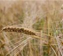 Тульским аграриям, пострадавшим из-за непогоды, могут оказать господдержку