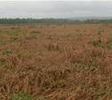 Неиспользуемые сельхозземли снова введут в оборот