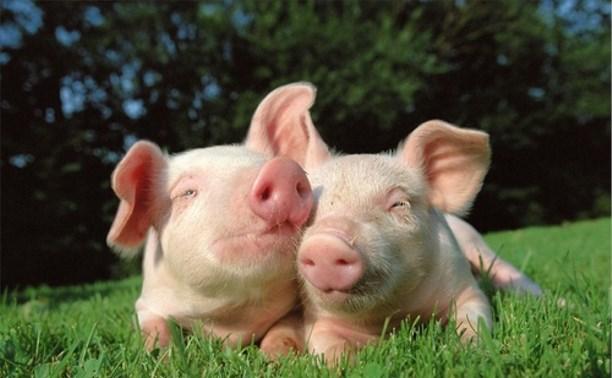 Минсельхоз не планирует ограничивать поголовье скота в личных подсобных хозяйствах