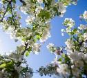 В последний день весны в Туле резко похолодает