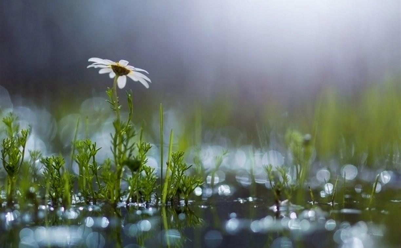 Вместе с дождями в Тулу придет похолодание