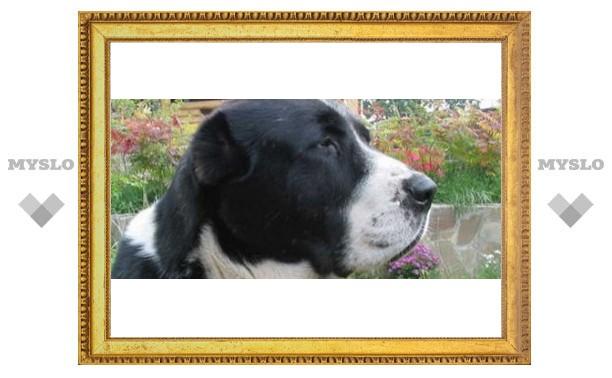 В Туле найдена собака