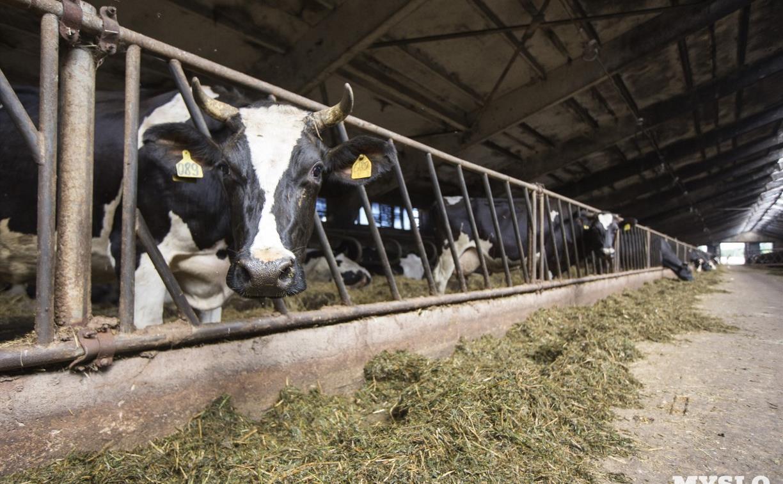 В Туле и области подорожало молоко