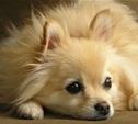 Тулячка пошла судиться из-за смерти собаки