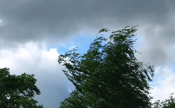 Из-за сильного ветра в Туле падают деревья