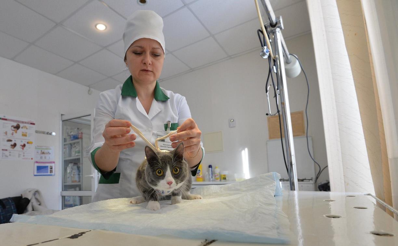 Тулячка в соцсетях заявила о массовом увольнении сотрудников ветеринарной станции