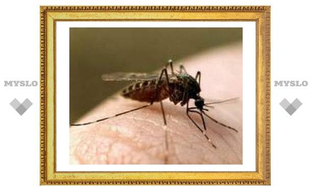 Как тулякам спастись от комаров?