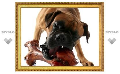 По одной из версий, житель Тульской области кормил человеческим мясом свою собаку