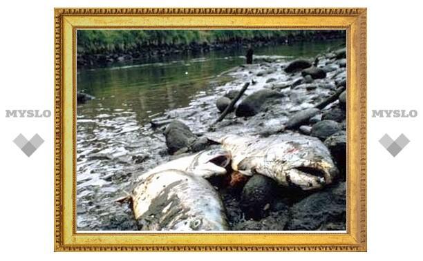 В Упе обнаружены скопления дохлой рыбы