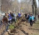3200 кустов и деревьев высадили сегодня в Туле в ходе субботника