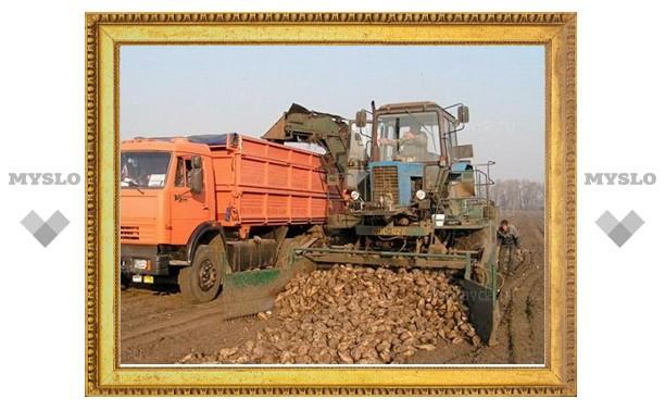Тульскую свеклу переработают в Белгороде и Курске
