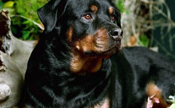 Россиян обяжут выгуливать бойцовских собак в специальных местах