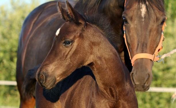 В Одоевском районе мужчина украл с фермы лошадь и жеребенка