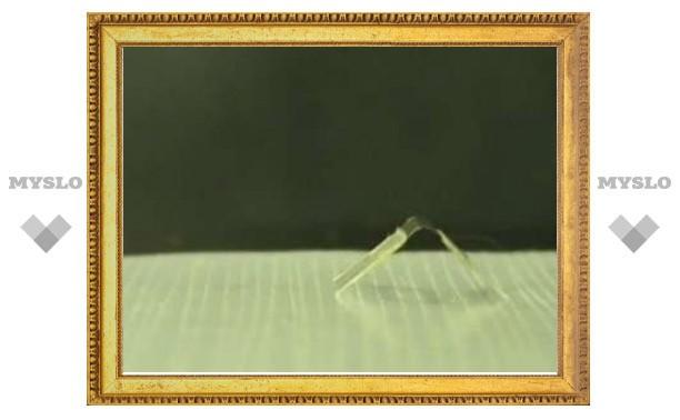Ученые создали управляемую водой шагающую гусеницу