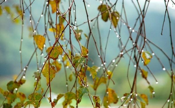 Погода в Туле 14 сентября: до +25, дождь с грозой и ветер