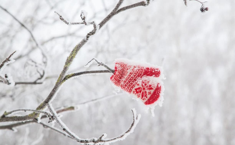 18 января в Туле морозно и без осадков