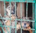 В Туле пройдет пикет в защиту животных
