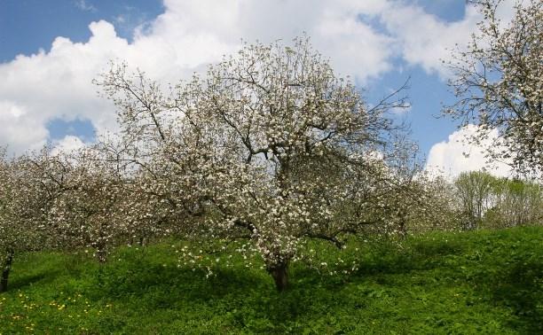 Ясная Поляна приглашает на «яблочную» экскурсию