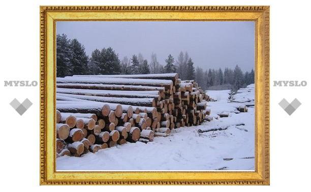 Под Тулой похищены деревья на полмиллиона