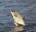 Суд оштрафовал туляка за ловлю рыбы в частном водоёме