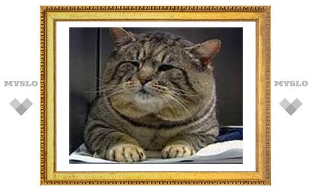 В Туле кот застрял между балкой и стеной