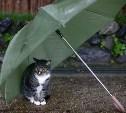 Погода в Туле 13 апреля: ночные заморозки, ветер и дождь