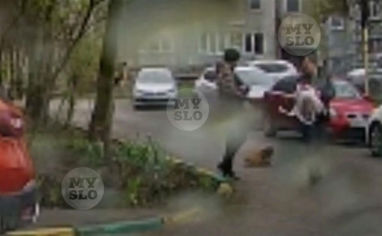 Туляк снял на видео, как мужчина избивает ногами маленькую собачку