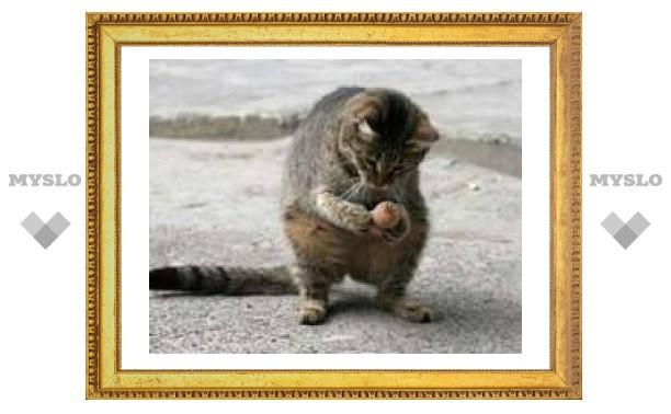 Туляки просят помочь спасти кота!