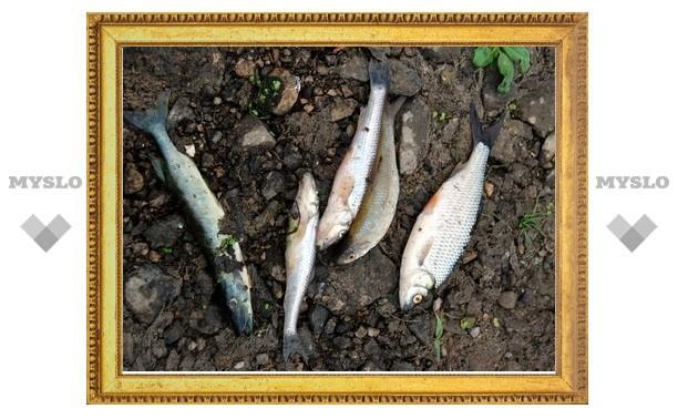 В Упе снова погибла рыба