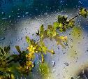 Погода в Туле 12 мая: дождь с грозой, ветер и до +25