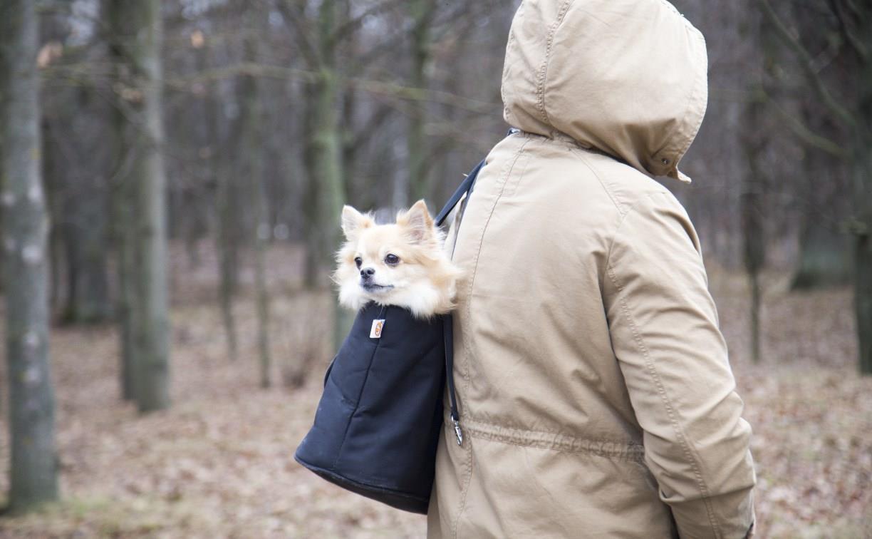 В Центральном и Рогожинском парках Тулы пройдут рейды по незаконному выгулу собак
