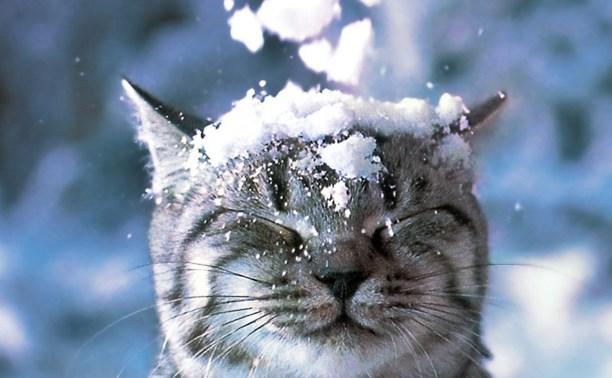 С понедельника в Тульской области возможен снег