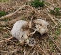Видео с места массовой гибели скота в Тульской области