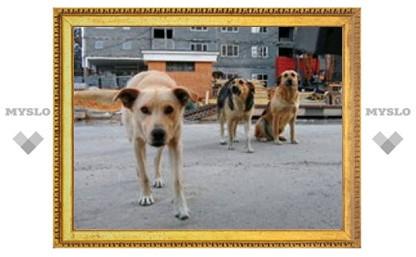 В Богородицке зверски расстреляли собак