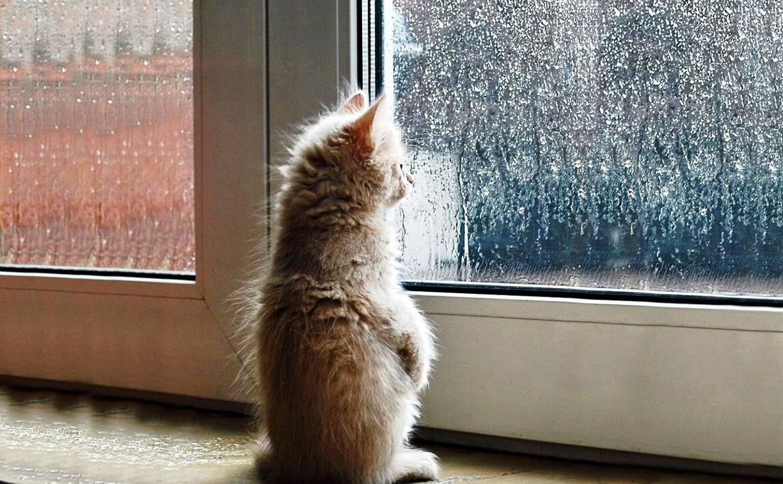 Погода в Туле 28 апреля: мокро, холодно и пасмурно