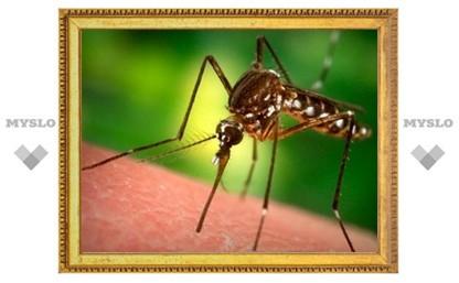 Туляки, остерегайтесь укусов комаров!