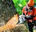 В Ефремовском районе мужчина незаконно спилил два ценных дуба