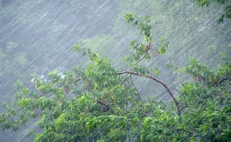Погода в Туле 25 июля: дождь с грозой и порывистый ветер