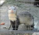 Зооуголок Центрального парка пополнится новыми животными