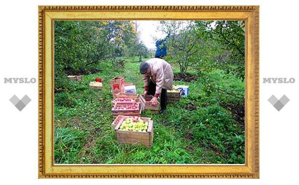 Под Тулой сборщикам яблок не платят зарплату