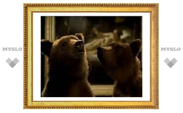 По CNN и Euronews покажут, как в Эрмитаже и Казанском соборе бродят медведи