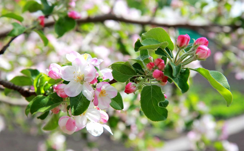 2 мая в Туле ясно и по-летнему тепло